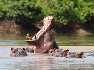 Humping Hippos and Necking Giraffes.