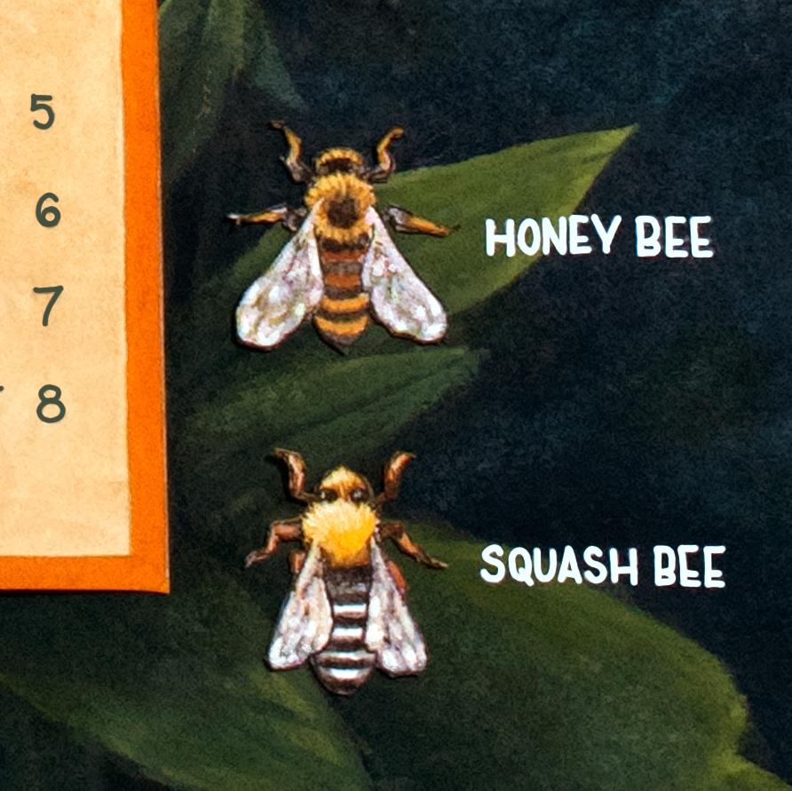 Ohio Pollinators close up bees