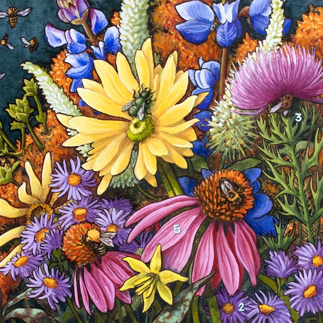 Ohio Pollinators close up flowers