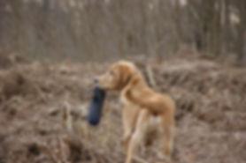 dog-dummy.jpg