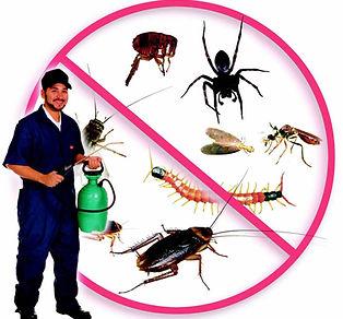 شركة مكافحة حشرات بالمدينة المنورة,شركة رش حشرات بالمدينة المنورة ,شركة مكافحة صراصير بالمدينة المنورة,ِشركة مكافحة النمل الابيض بالمدينة المنورة,شركة مكافحة بق الفراش بالمدينة المنورة