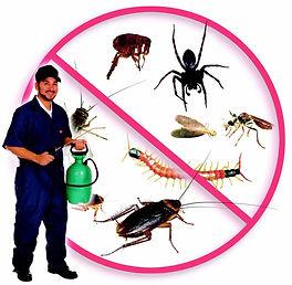 شركة مكافحة حشرات بالمدينة المنورة,شركة رش حشرات بالمدينة المنورة