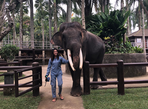 Congratulations, you boycotted an elephant camp! Now what happens?