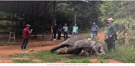 What is an elephant camp assessment?