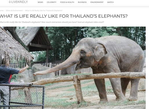What is life really like for Thailand's elephants?