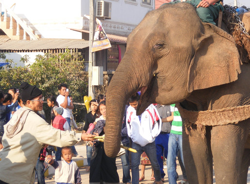 Taking back the reins: The need for science in elephant-based tourism policy.