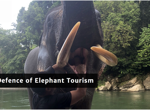 In defence of elephant tourism