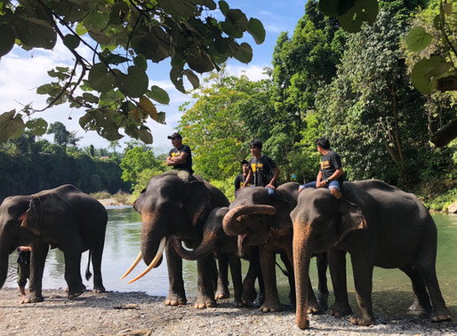 What is an elephant camp audit?