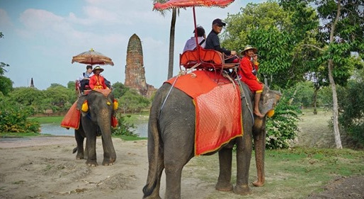 Skift article highlights the complexities of elephant tourism.