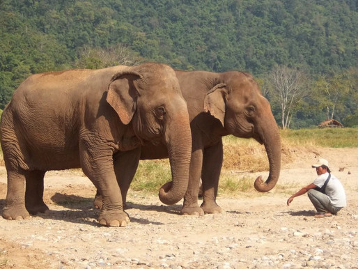 Stricter guidelines on elephant tourism put Thai travel agents in a quandary.