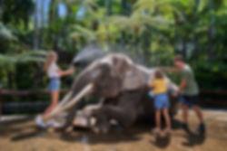 Elephant Wash.jpg