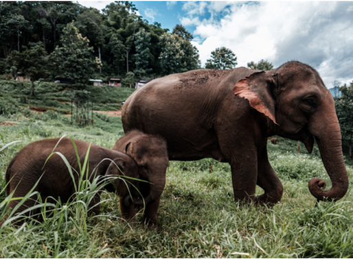 Time to rethink elephant tourism