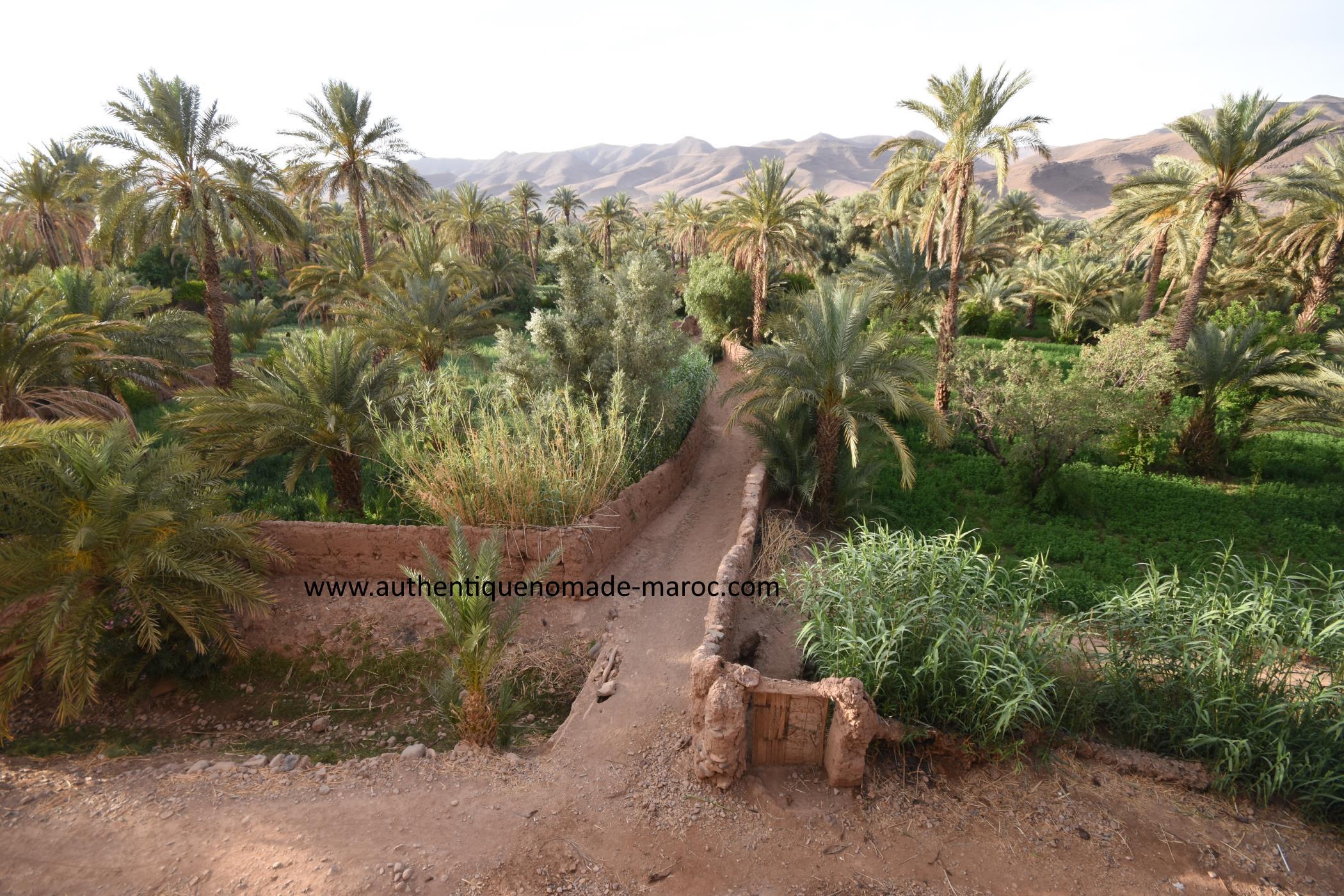 palmeraie sud maroc