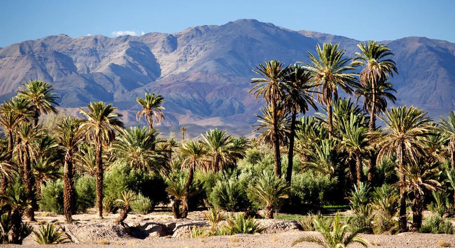 palmier vallée Draa