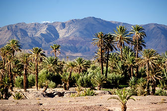 The date palm plantations of Skoura in s