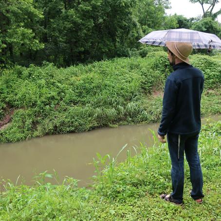 Jim King Trail - greenway along Beargrass Creek south fork: Kentucky Nature Walks (6/18/19)