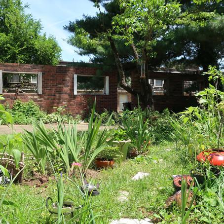Backyard Biodiversity: 6/13/19 update vlog