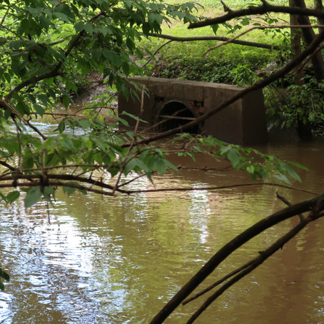 Rising water levels in south fork of Beargrass Creek - 6/24/19