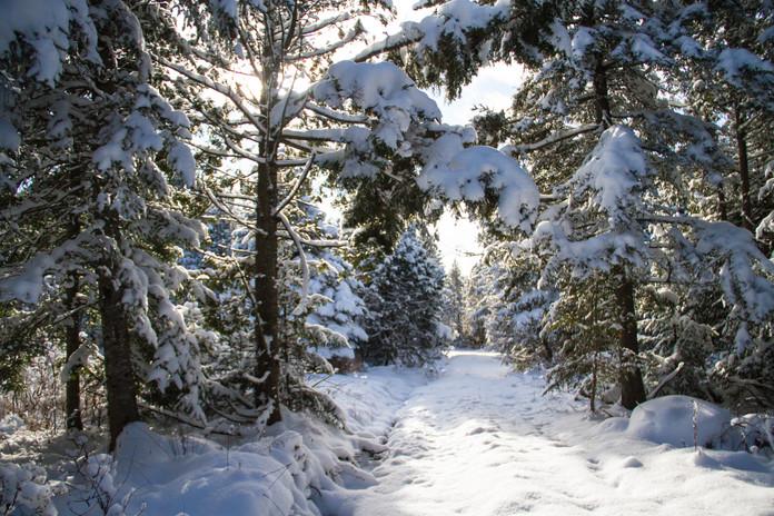 La cours l'hiver