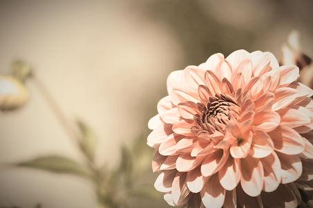 flower-1331415_1920_edited_edited.jpg