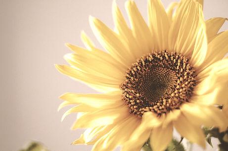 sunflower-984381_1920%20(1)_edited.jpg