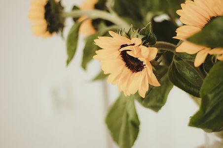 sunflower-4581098_1920_edited.jpg