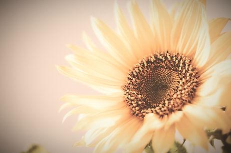 sunflower-984381_1920_edited_edited.jpg