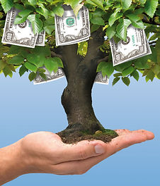 money tree.jpg