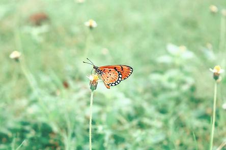 butterfly-2524898_1920_edited.jpg