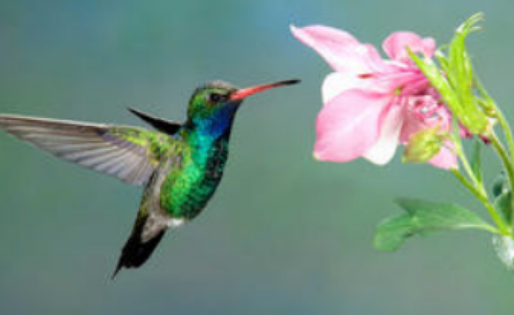 Hummingbird- Colibrí - Spirit Animal