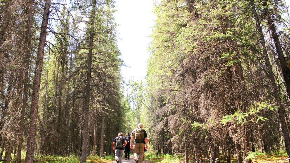 2020 Summer Guide to Denali National Park