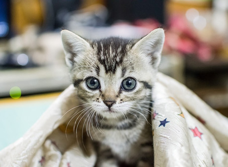 Tips for Future Cat Owners Who Want a Purr-Fect Transition for Their Pet