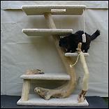 Phoenix Feline Furniture