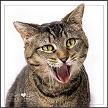 Heart Spot Pet & Family Portraits