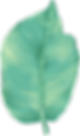 Grossblaettriger