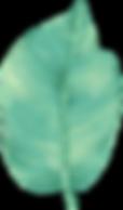 Big Leaf