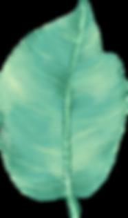 Big feuilles