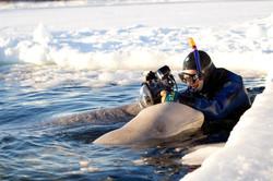 with belugas(Custom)