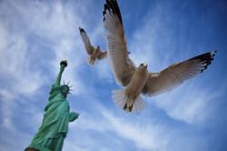 Seagulls, USA.