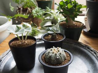 8/16-8/18観葉植物SALEを開催します
