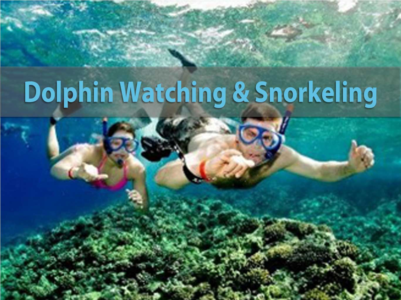 Dolphin-watching-&-snorkeling-trip