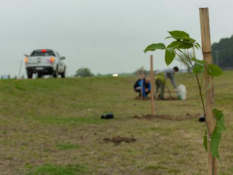 Más de 350 nuevos árboles en Ramírez