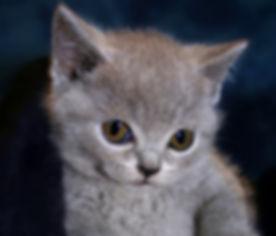 Jack-Bink dierendag 2019.jpg