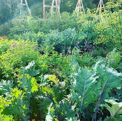 Summer morning in the garden #peace