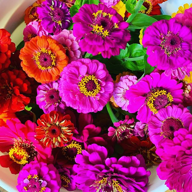 We got zinnias! Come see us at the Delph