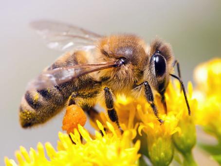 L'abeille est un insecte extraordinaire vous allez l'aimer 🤗