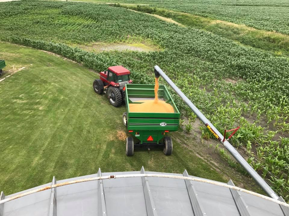 A farmer from Amish Family Popcorn harvesting popcorn with a tractor