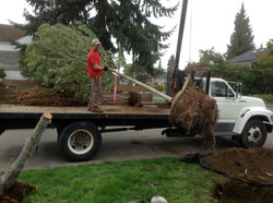 Big equipment for big trees