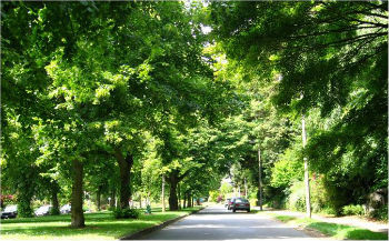 Valuing the Urban Forest