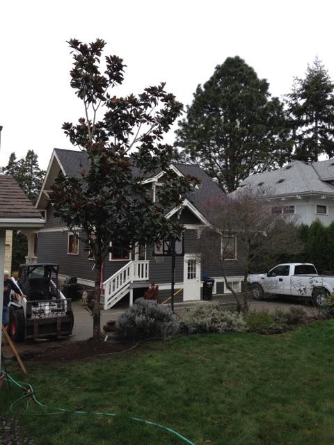 Big tree install